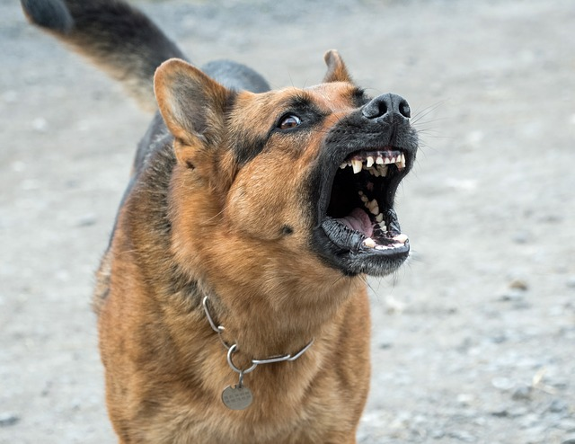 Are Dogs Actually Vicious? The Truth Behind Dog Attacks