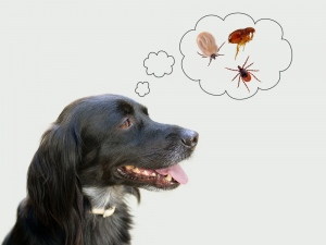 A Comprehensive Guide To Get Rid of Fleas