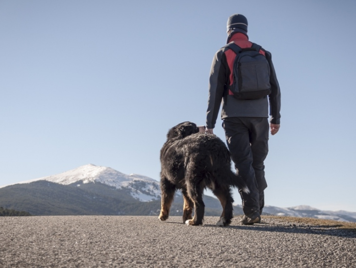 Travels With (and Without) Your Dog